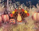 Guajo the little Turkey
